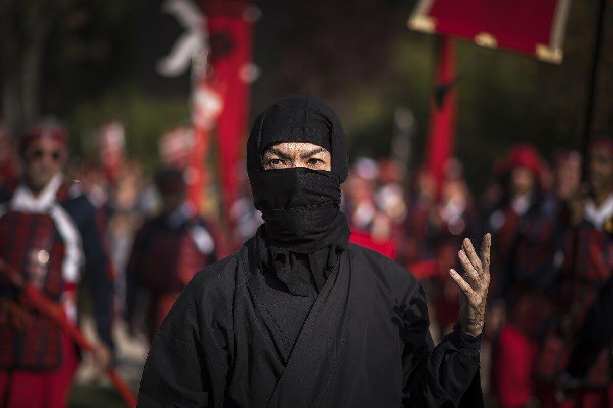 ninja studies